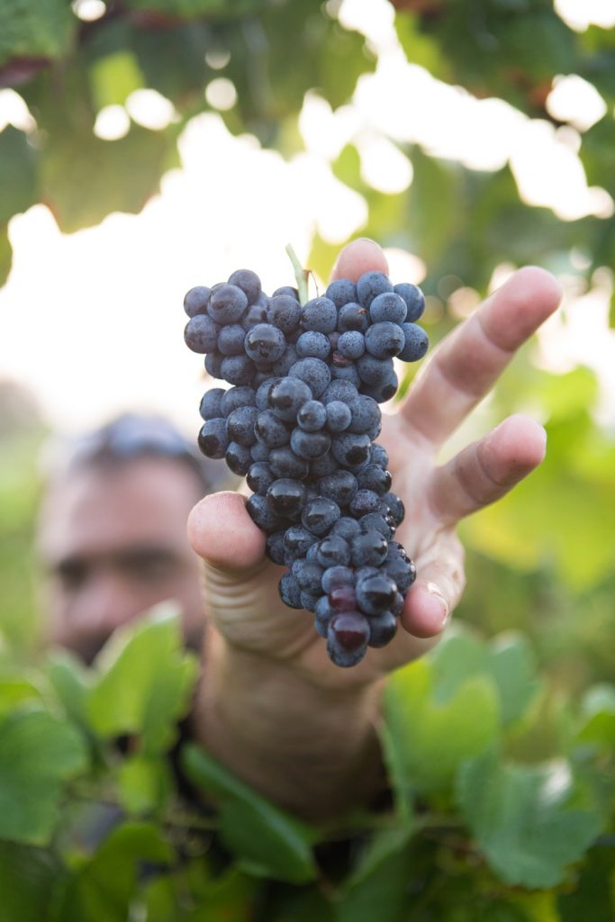 the colour of wine documentary, south african wine industry,