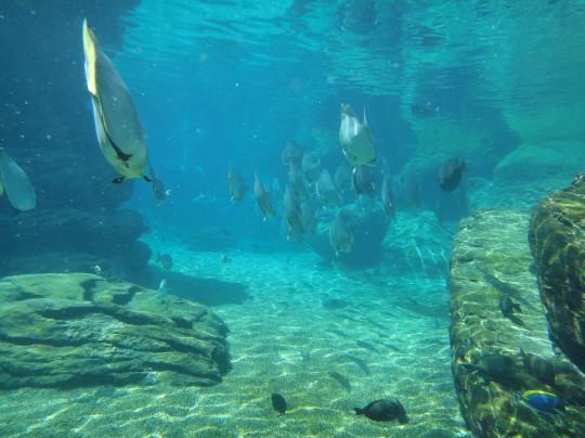 Snorkeling at UShaka Marine World